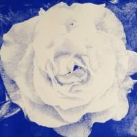 Min Blå rose